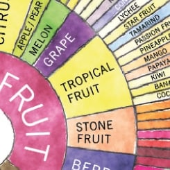 Download Counter Culture Coffee Taster's Flavor Wheel | Counter Culture Coffee