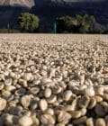 Coffee in parchment drying on a patio.
