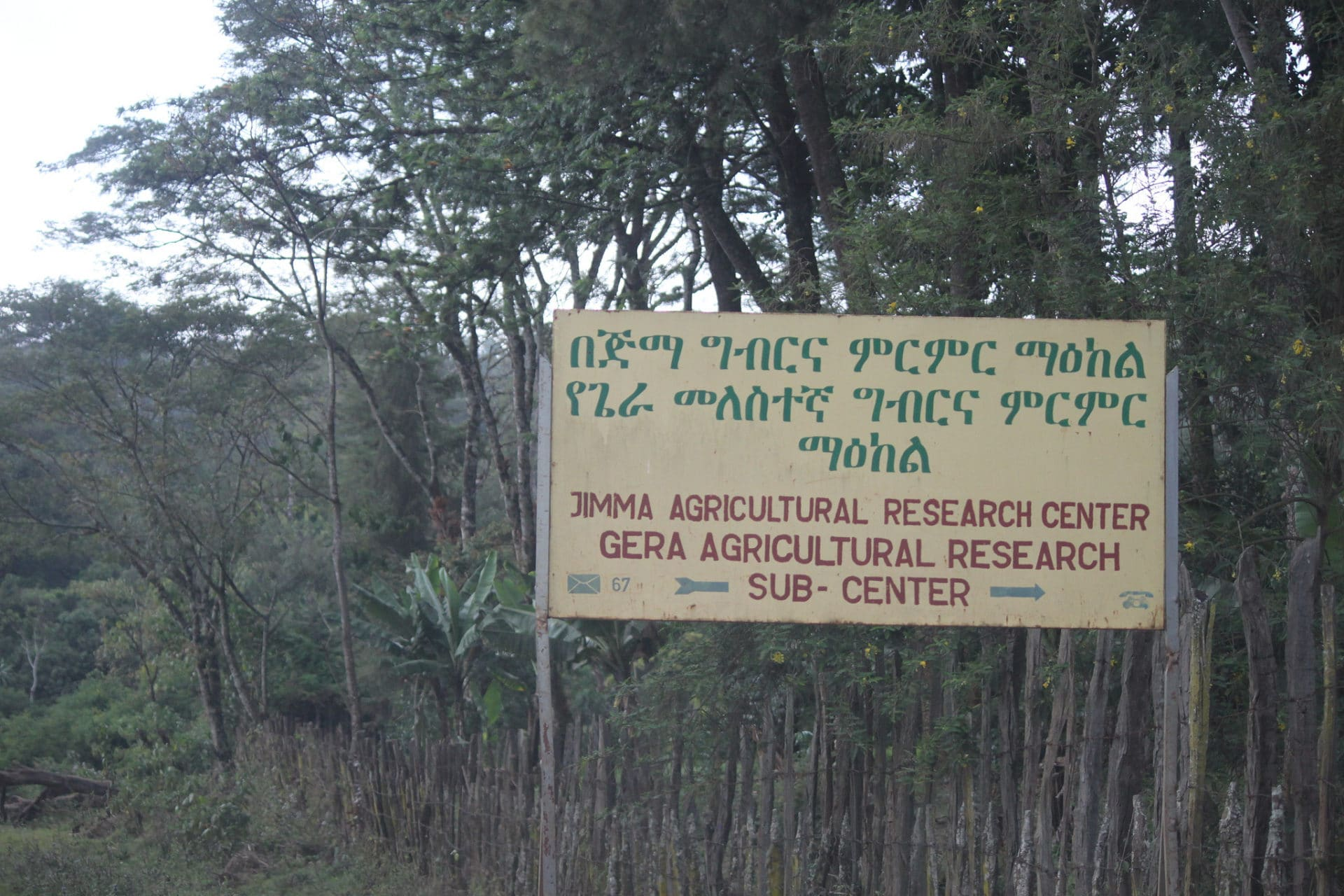 Jimma Agricultural Research Center's sub-location research plot in Gera